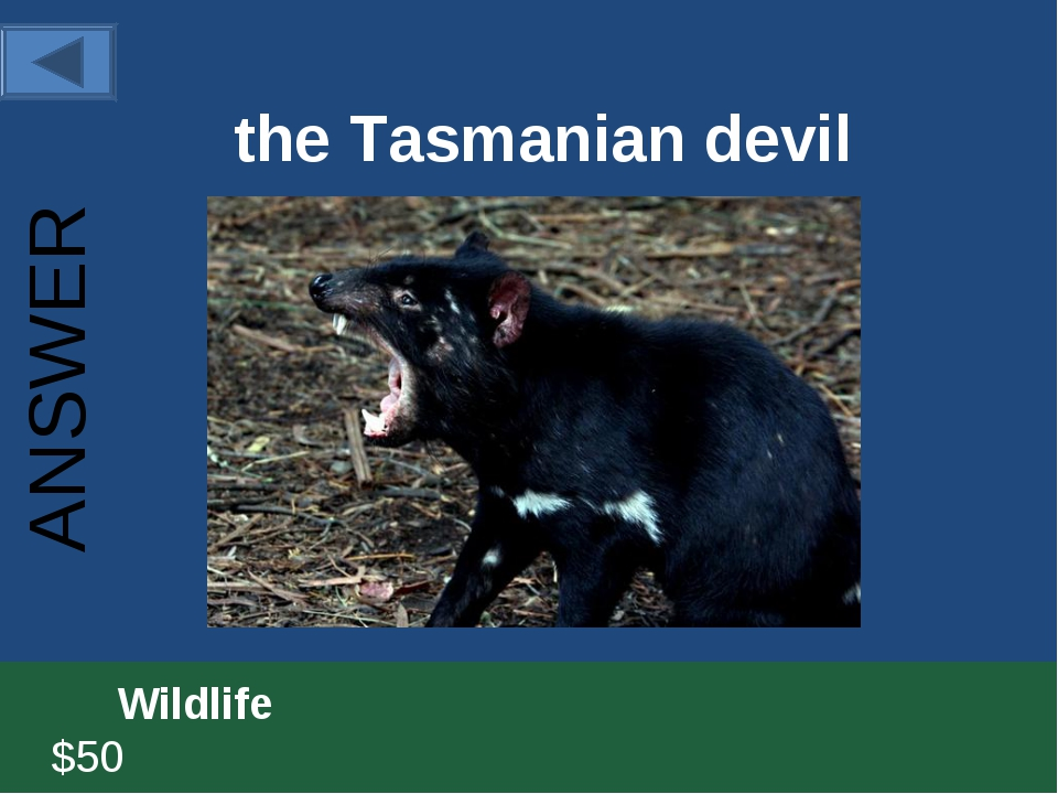 the Tasmanian devil 		Wildlife						 $50 ANSWER