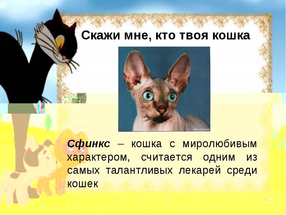 Скажи мне, кто твоя кошка Сфинкс – кошка с миролюбивым характером, считается...