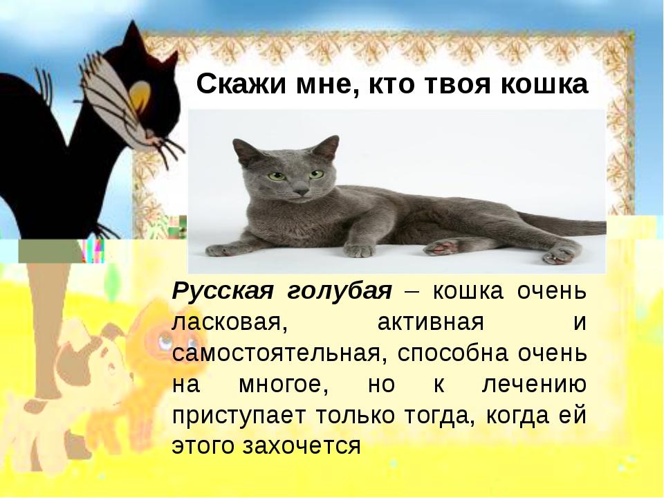 Скажи мне, кто твоя кошка Русская голубая – кошка очень ласковая, активная и...