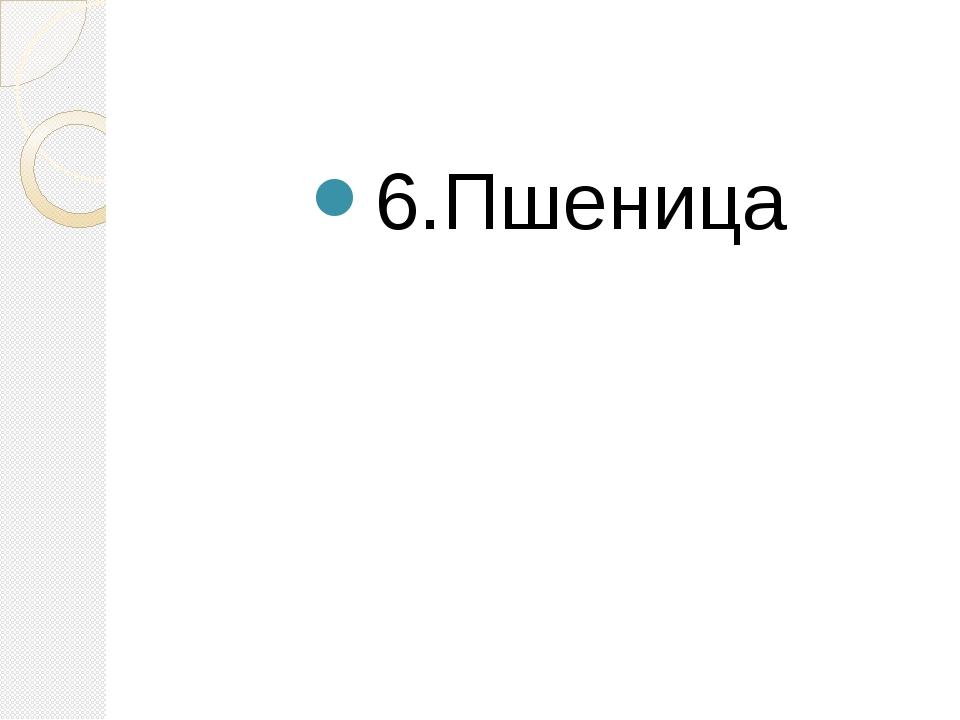 6.Пшеница