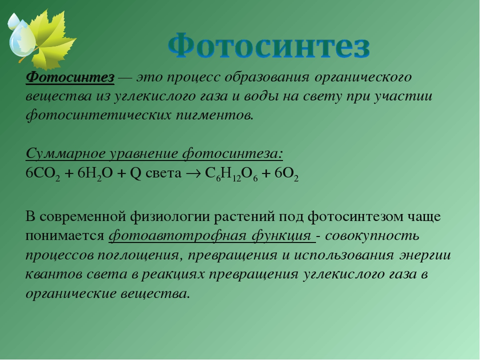 Фотосинтез — это процесс образования органического вещества из углекислого га...