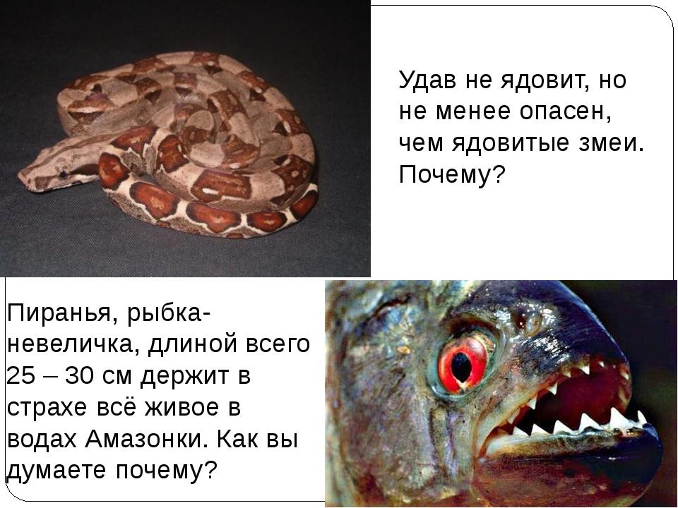 Удав не ядовит, но не менее опасен, чем ядовитые змеи. Почему? Пиранья, рыбка...