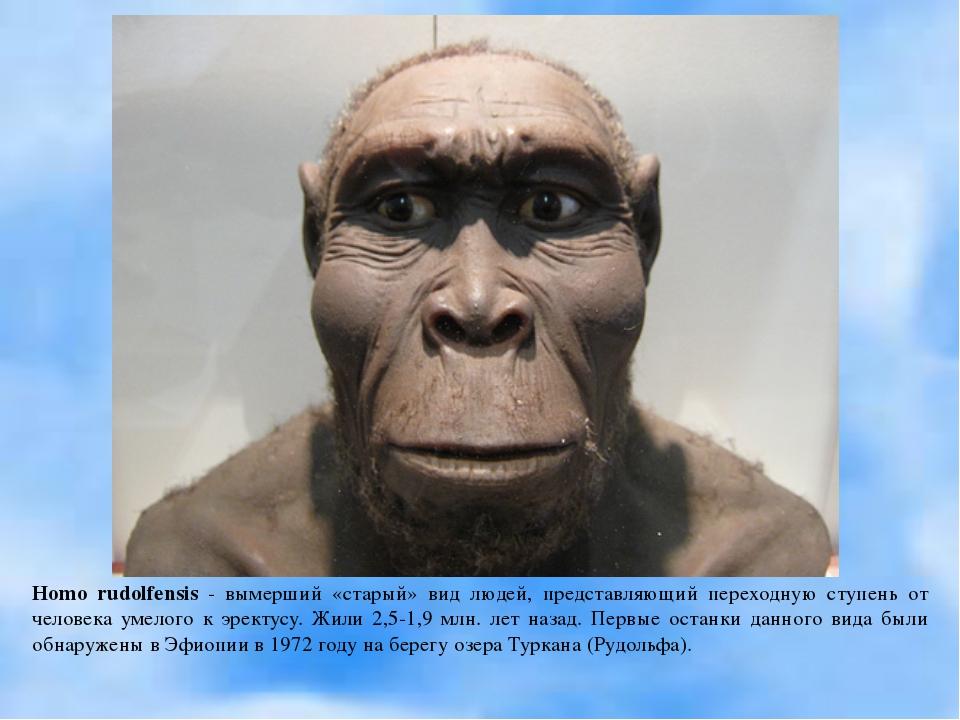 Homo rudolfensis - вымерший «старый» вид людей, представляющий переходную сту...