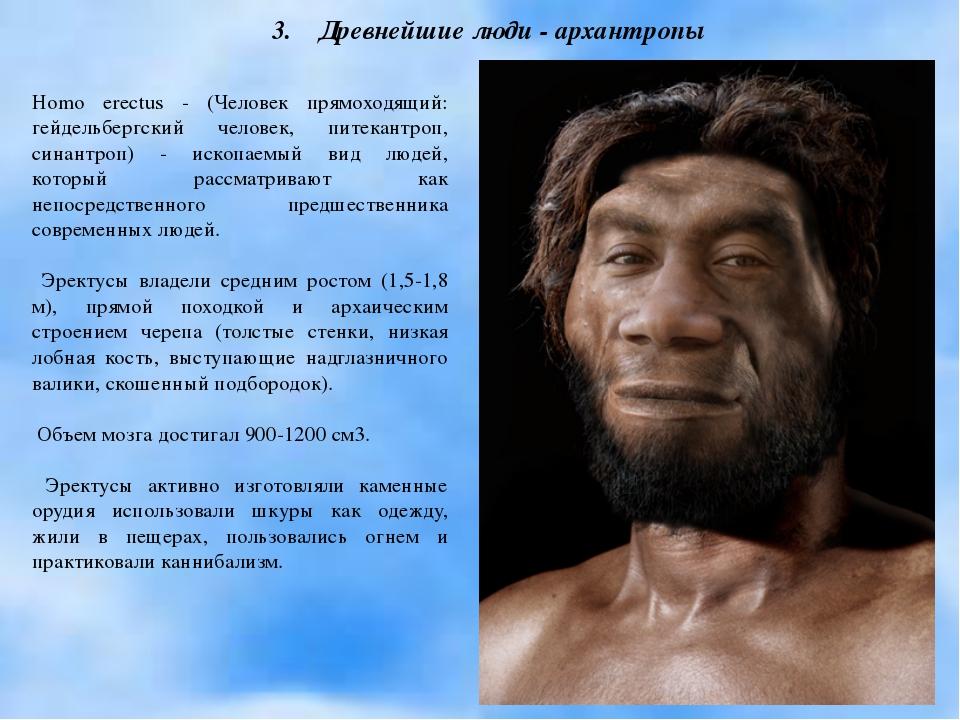 Homo erectus - (Человек прямоходящий: гейдельбергский человек, питекантроп, с...