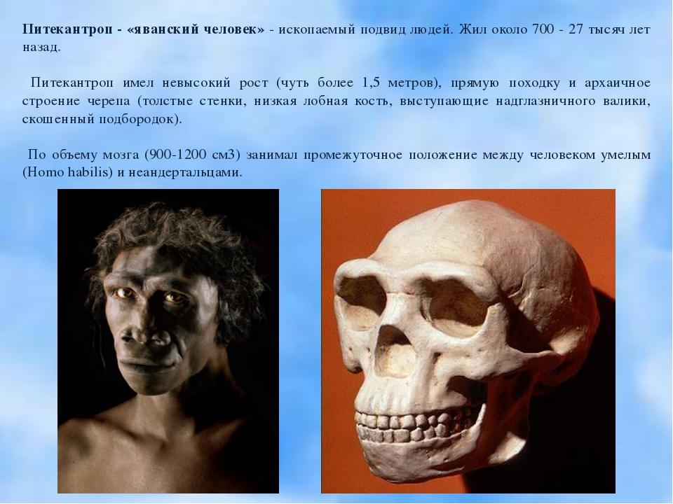 Питекантроп - «яванский человек» - ископаемый подвид людей. Жил около 700 - 2...