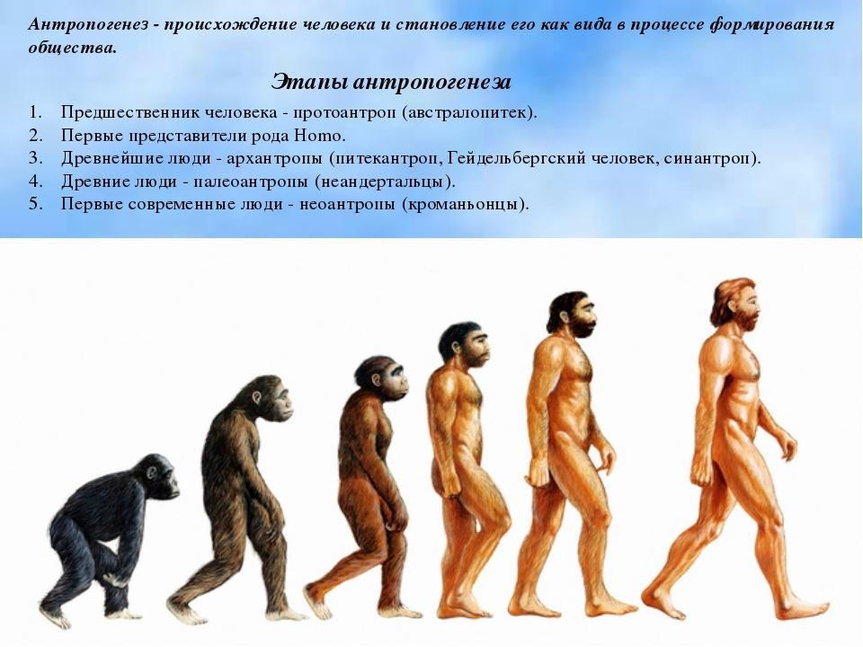 Антропогенез - происхождение человека и становление его как вида в процессе ф...