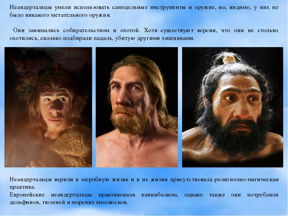 Неандертальцы умели использовать самодельные инструменты и оружие, но, видимо...