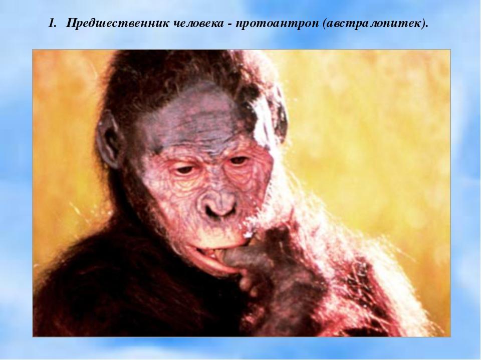 Предшественник человека - протоантроп (австралопитек).