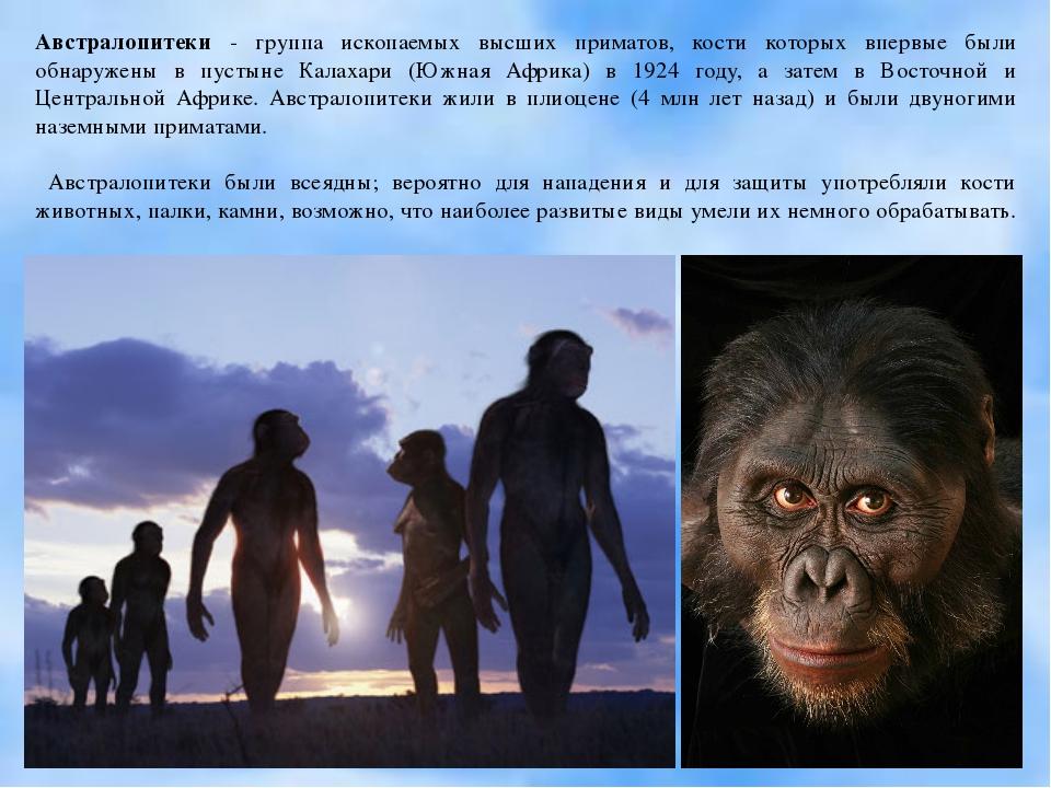 Австралопитеки - группа ископаемых высших приматов, кости которых впервые был...
