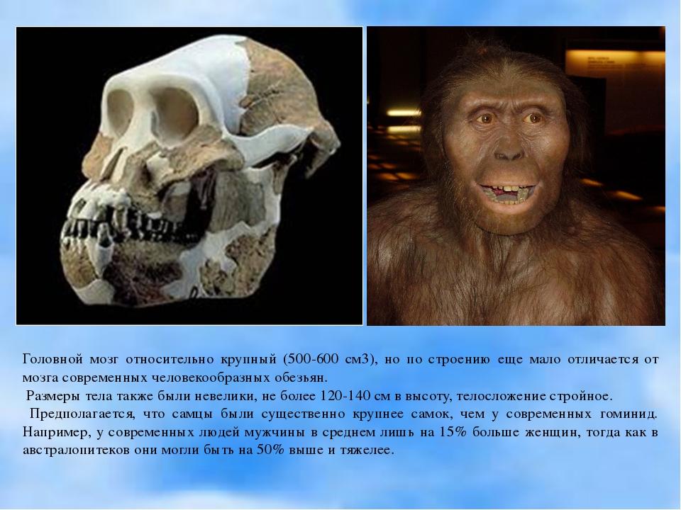 Головной мозг относительно крупный (500-600 см3), но по строению еще мало отл...