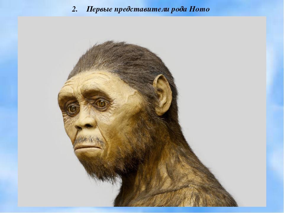 Первые представители рода Homo
