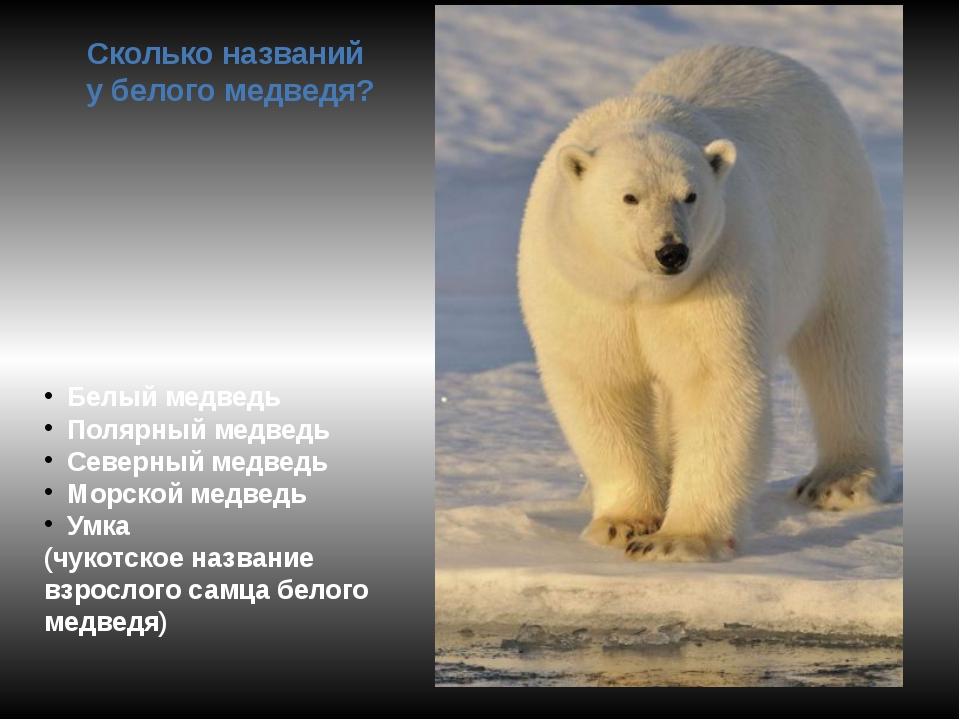 Сколько названий у белого медведя? Белый медведь Полярный медведь Северный ме...