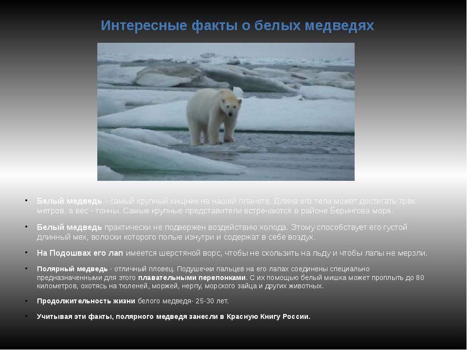 Интересные факты о белых медведях Белый медведь - самый крупный хищник на наш...