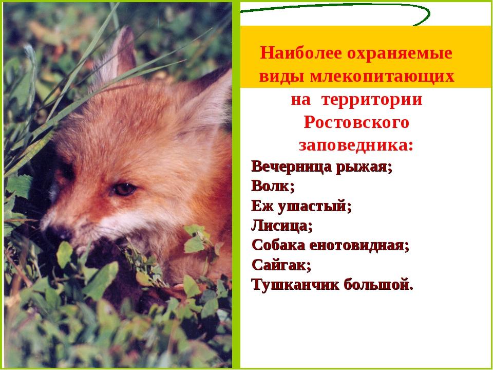 Наиболее охраняемые виды млекопитающих на территории Ростовского заповедника:...