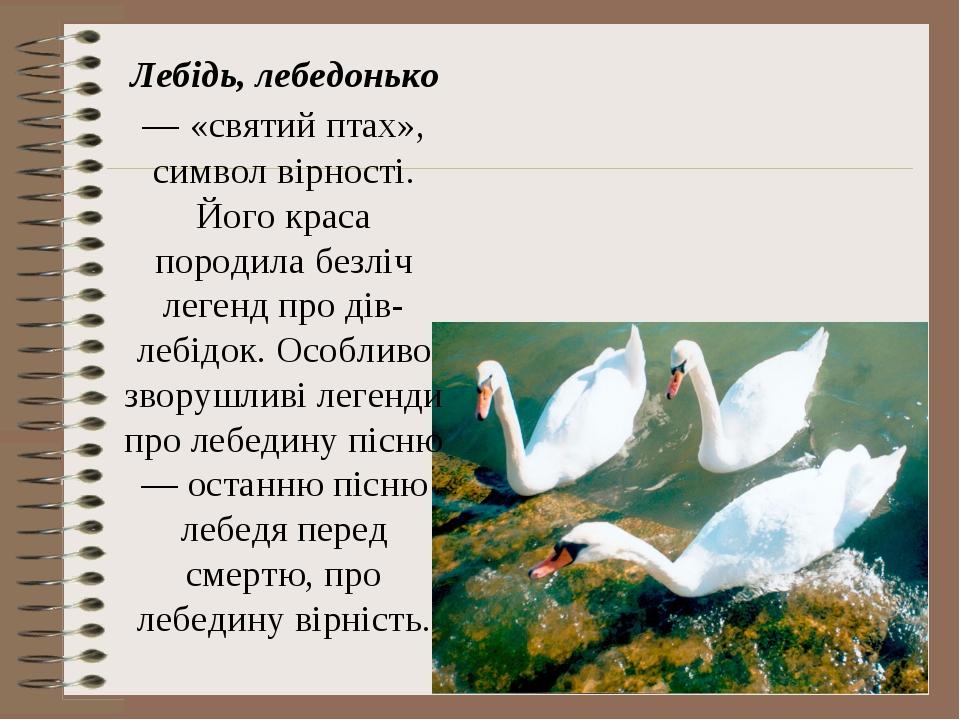 Лебідь, лебедонько — «святий птах», символ вірності. Його краса породила безл...