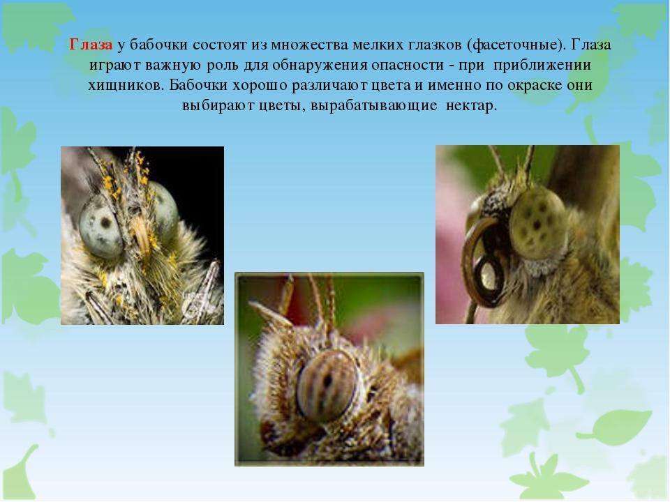 Глаза у бабочки состоят из множества мелких глазков (фасеточные). Глаза играю...