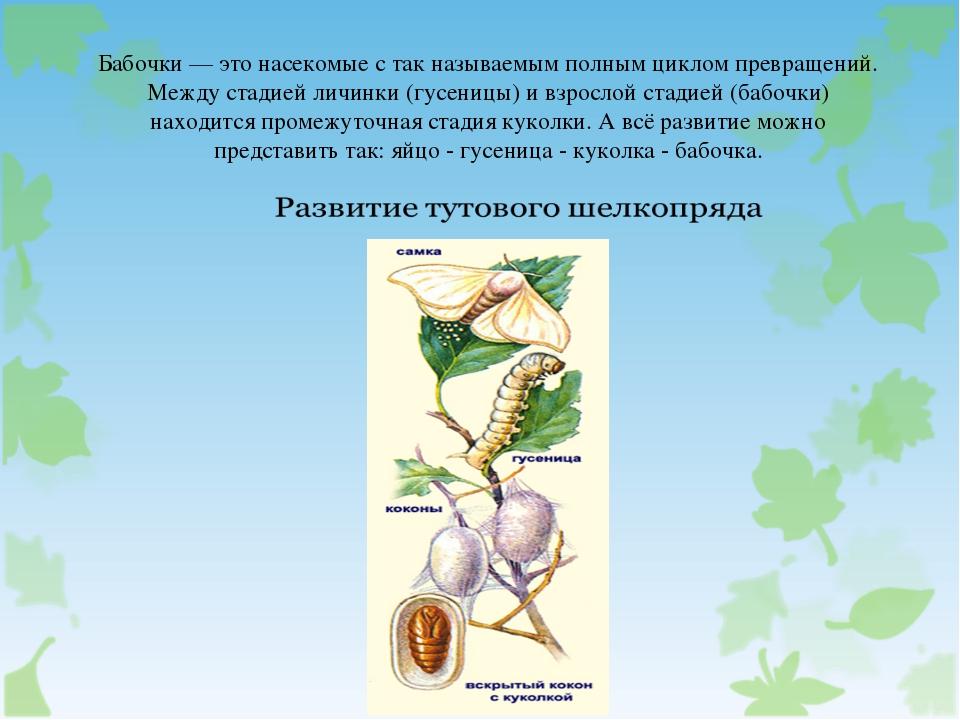 Бабочки — это насекомые с так называемым полным циклом превращений. Между ста...