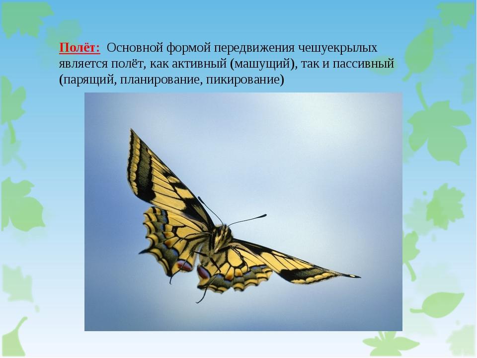 Полёт: Основной формой передвижения чешуекрылых является полёт, как активный...
