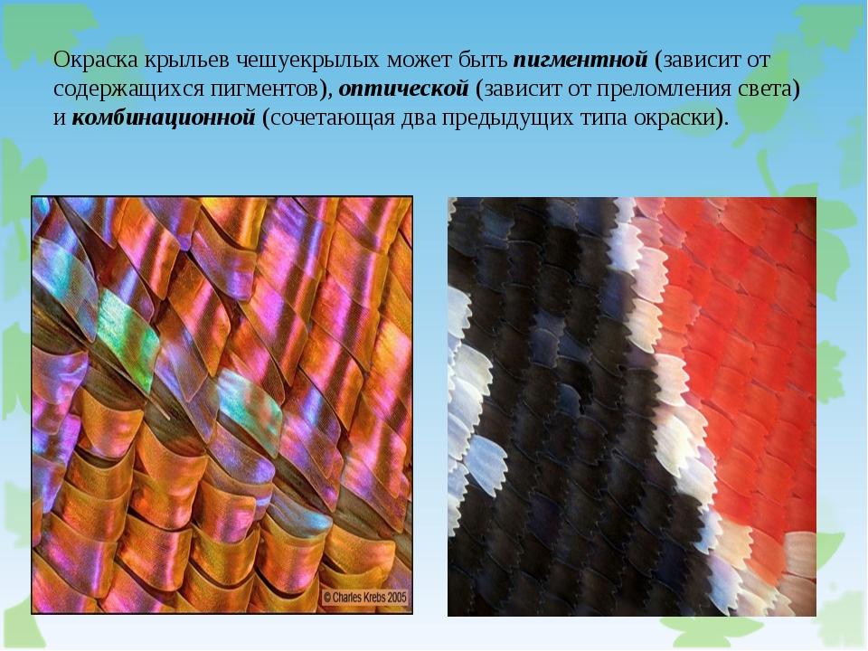 Окраска крыльев чешуекрылых может бытьпигментной(зависит от содержащихся пи...