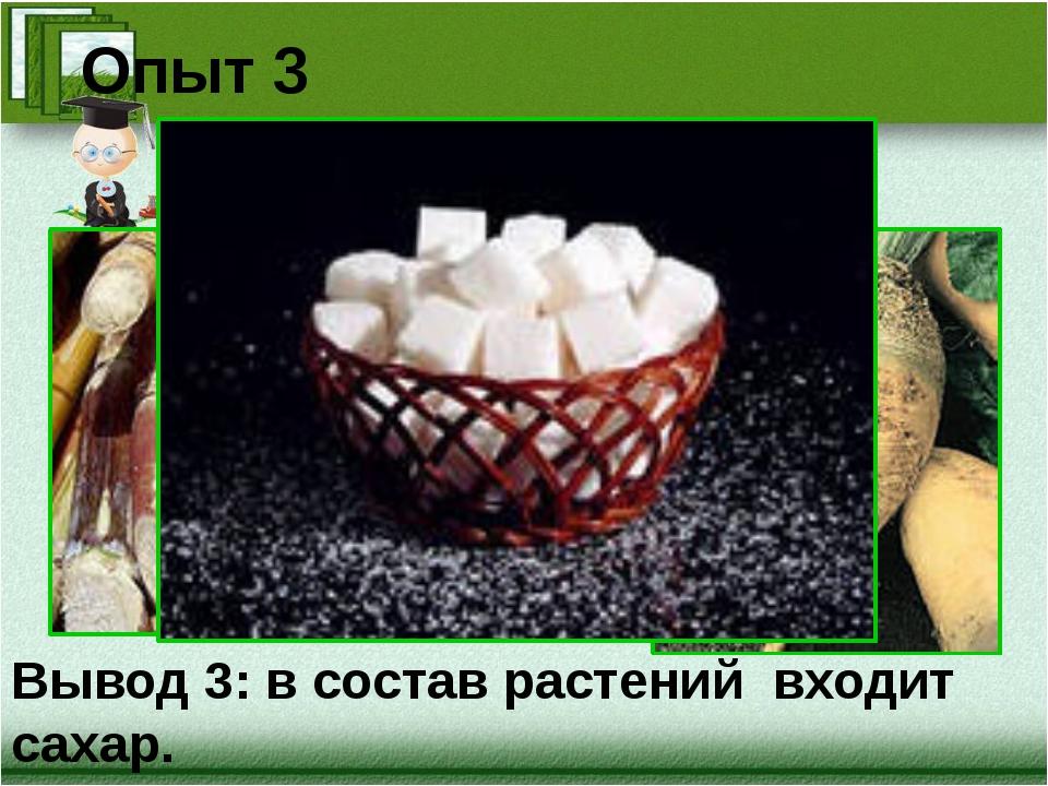 Опыт 3 Вывод 3: в состав растений входит сахар.