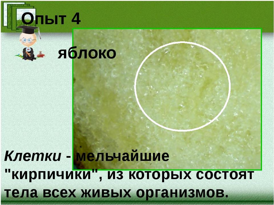 """яблоко Опыт 4 Клетки - мельчайшие """"кирпичики"""", из которых состоят тела всех..."""