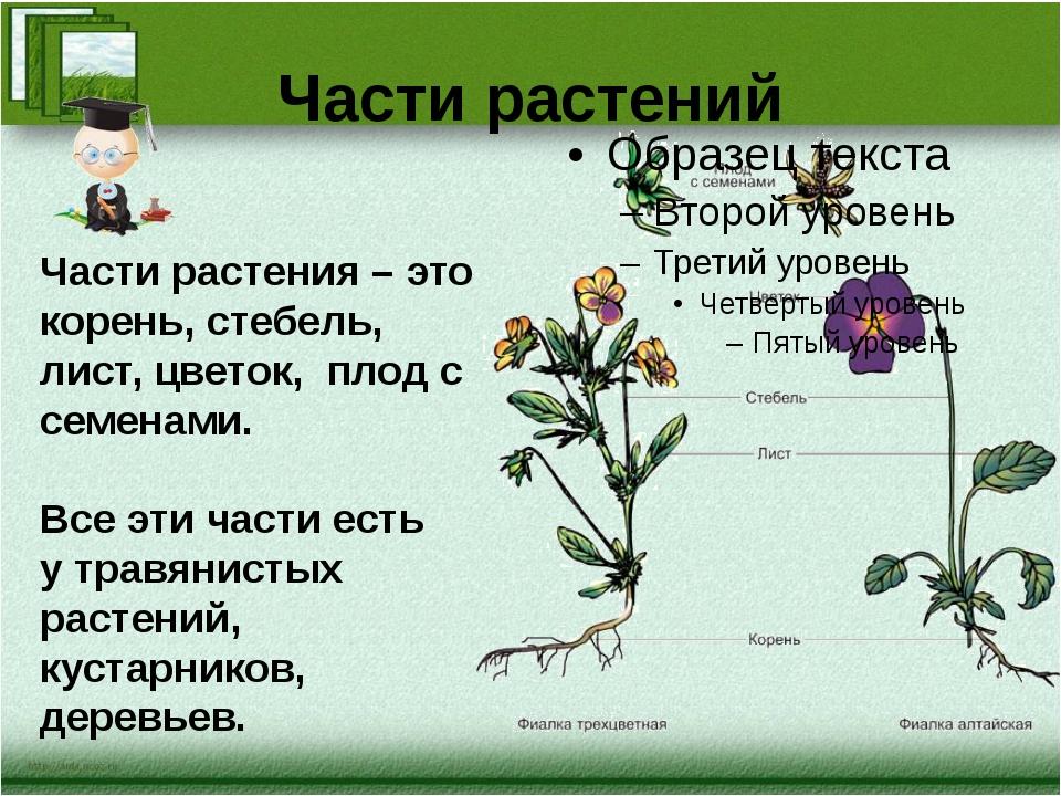 Части растений Части растения – это корень, стебель, лист, цветок, плод с сем...