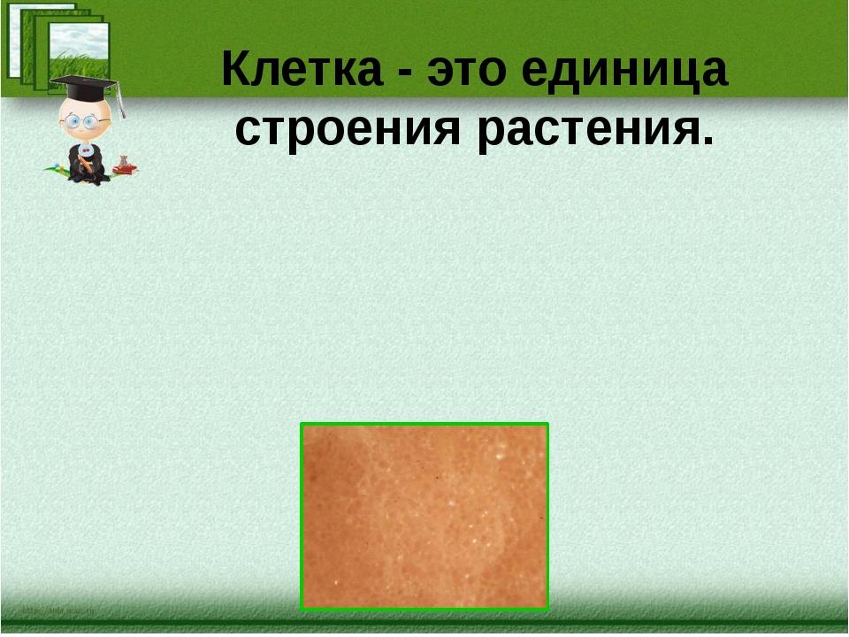 Клетка - это единица строения растения.