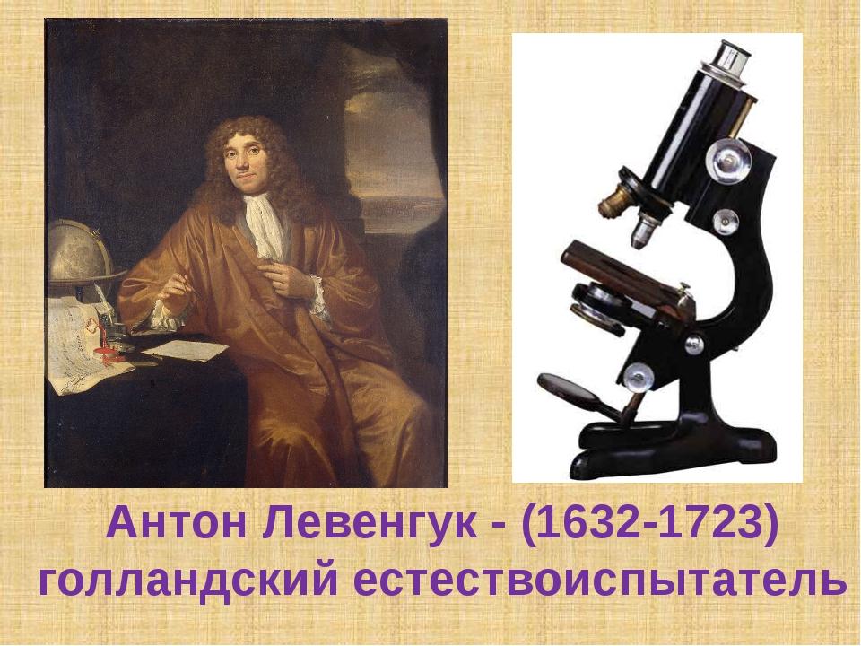 Антон Левенгук - (1632-1723) голландский естествоиспытатель