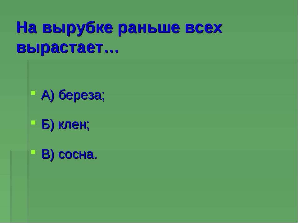 На вырубке раньше всех вырастает… А) береза; Б) клен; В) сосна.