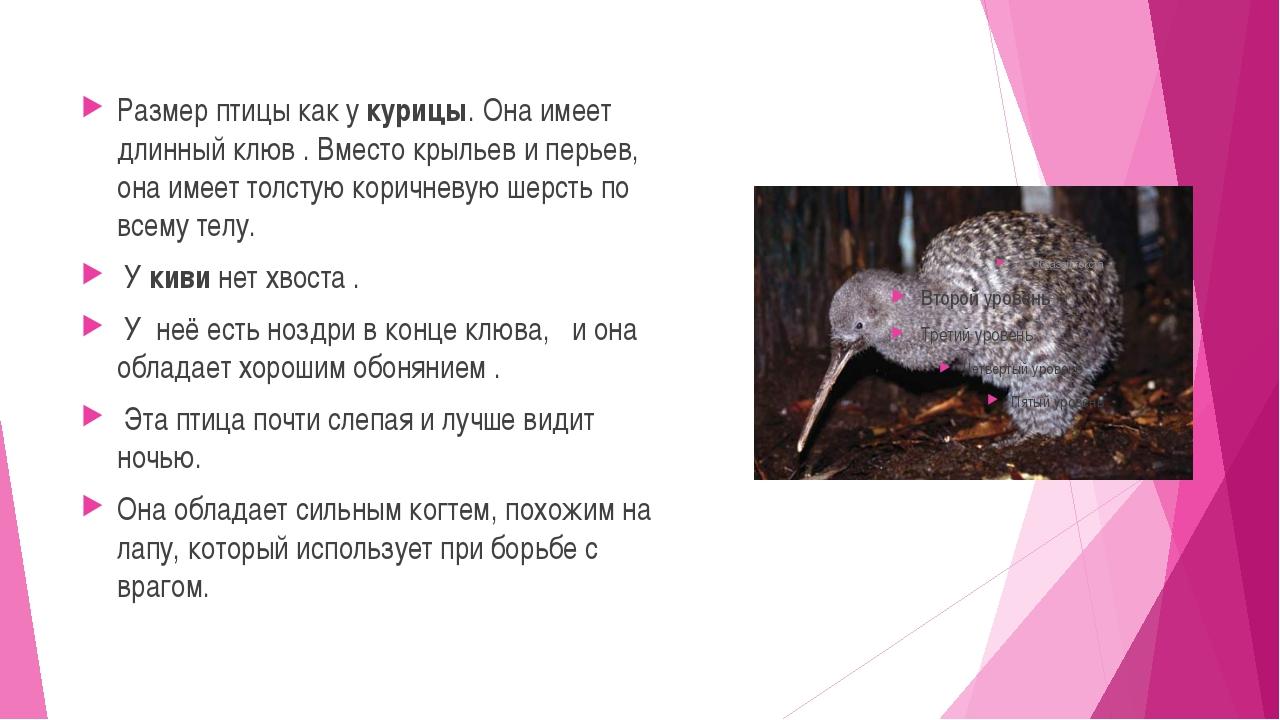 Размер птицы как укурицы.Она имеет длинный клюв .Вместо крыльев и перьев,...