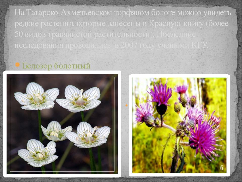 На Татарско-Ахметьевском торфяном болоте можно увидеть редкие растения, котор...