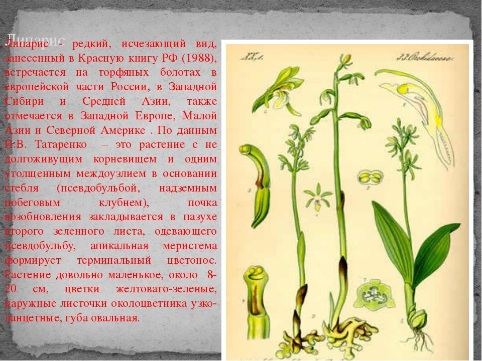Липарис Липарис - редкий, исчезающий вид, занесенный в Красную книгу РФ (1988...