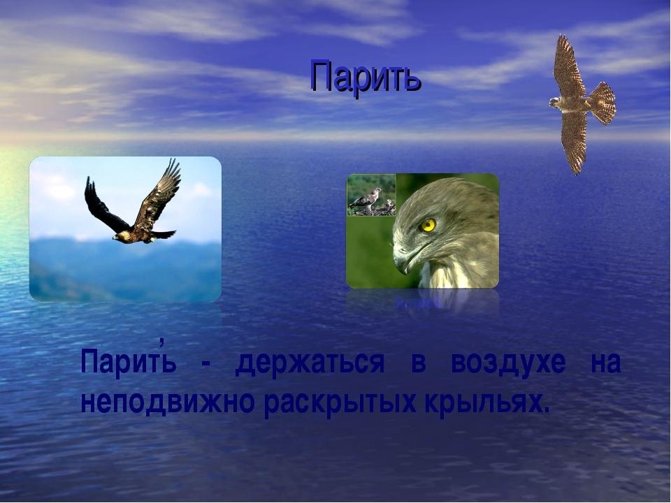 Парить Парить - держаться в воздухе на неподвижно раскрытых крыльях. , Ястреб