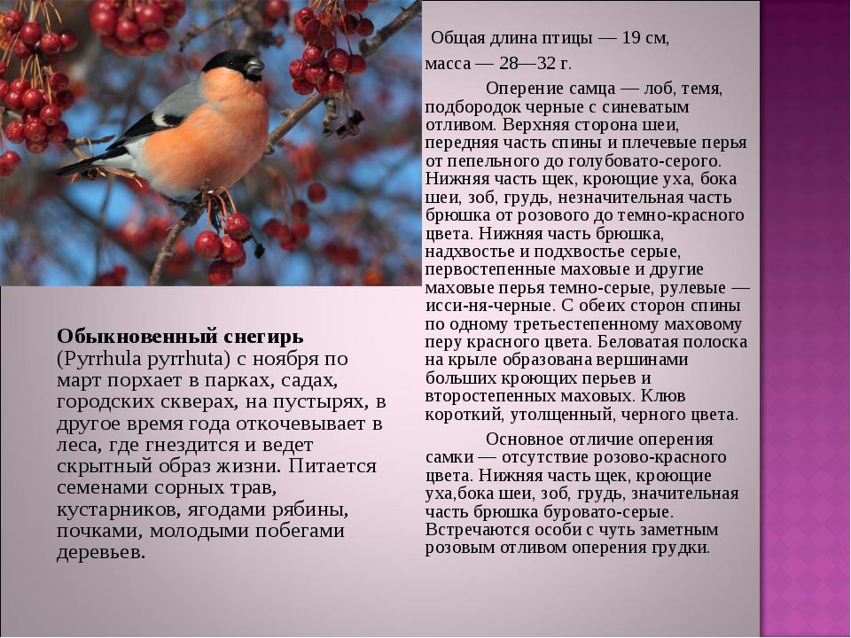 Общая длина птицы — 19 см, масса — 28—32 г. Оперение самца — лоб, темя,...
