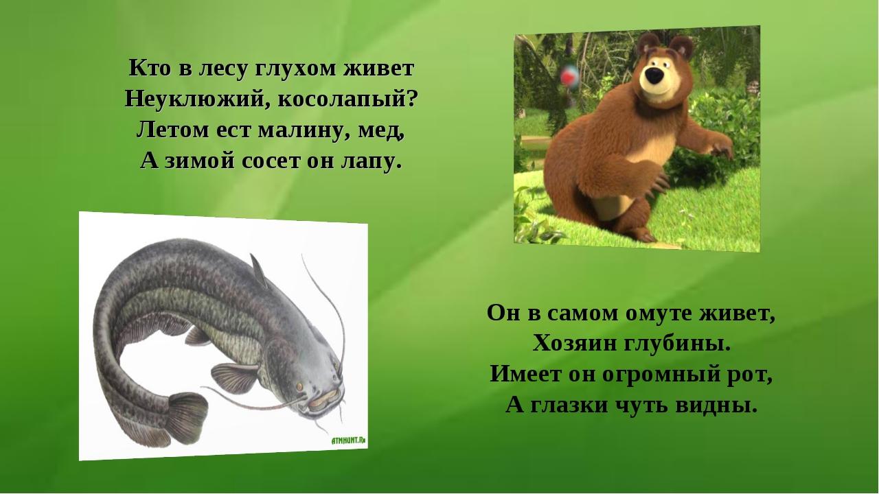 Кто в лесу глухом живет Неуклюжий, косолапый? Летом ест малину, мед, А зимой...