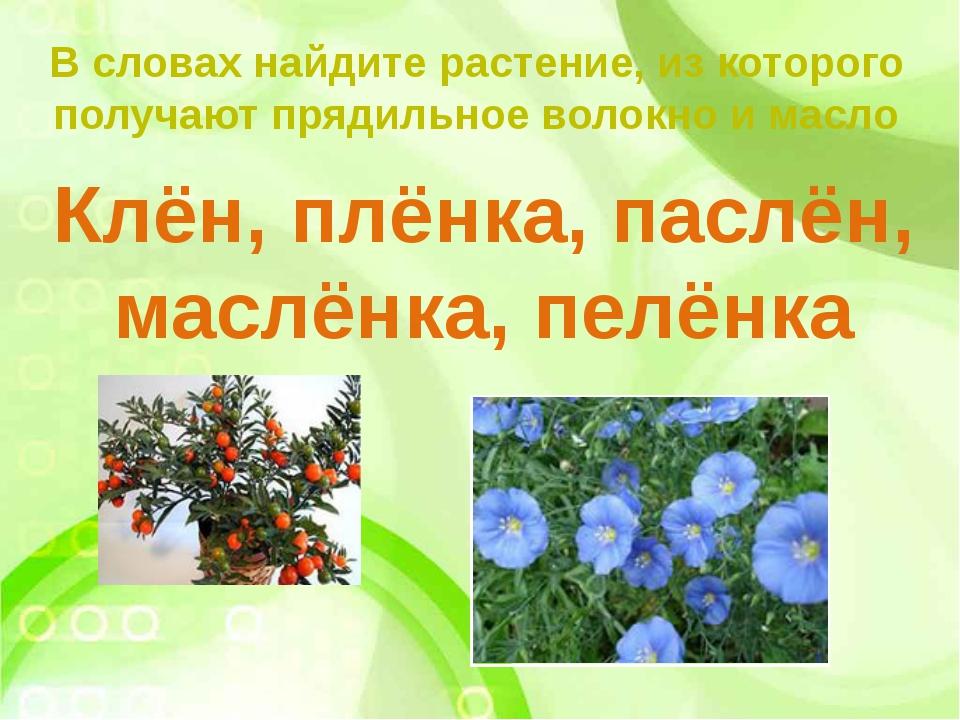 В словах найдите растение, из которого получают прядильное волокно и масло Кл...