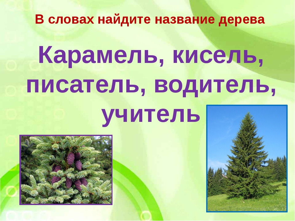В словах найдите название дерева Карамель, кисель, писатель, водитель, учитель