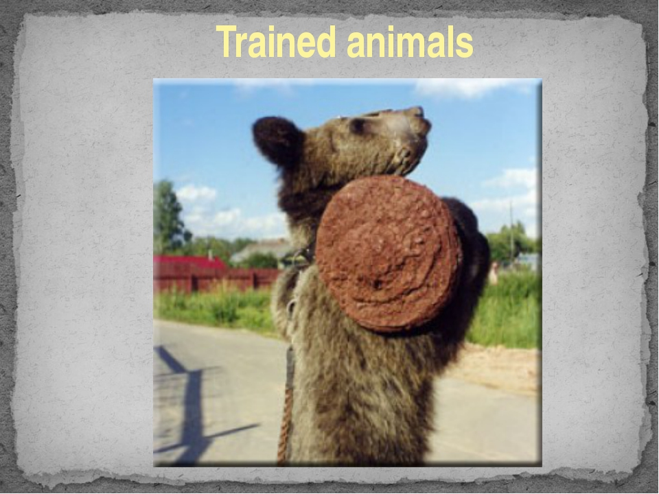 Trained animals
