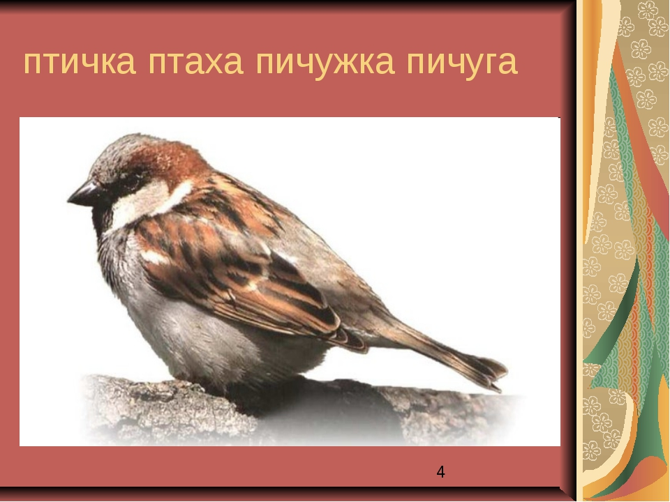 птичка птаха пичужка пичуга