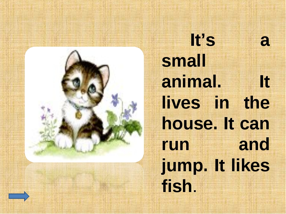 It's a small animal. It lives in the house. It can run and jump. It likes fi...