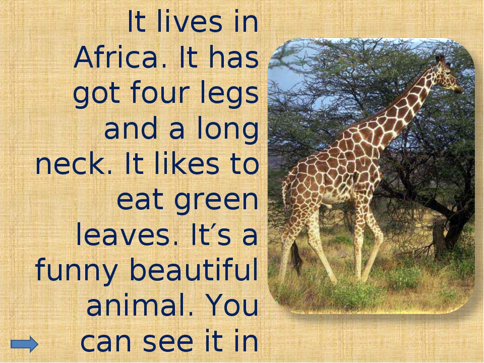 It lives in Africa. It has got four legs and a long neck. It likes to eat g...