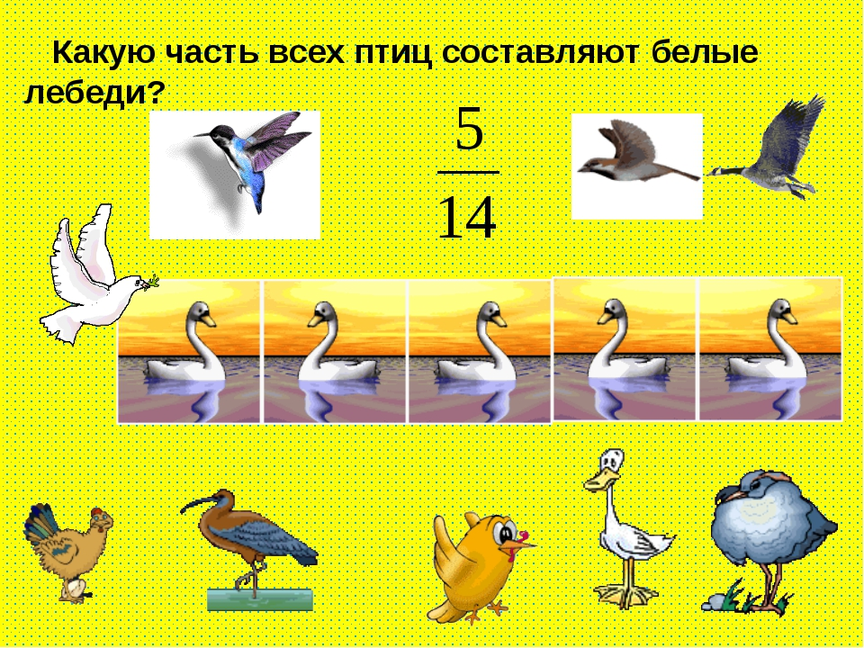 Какую часть всех птиц составляют белые лебеди?