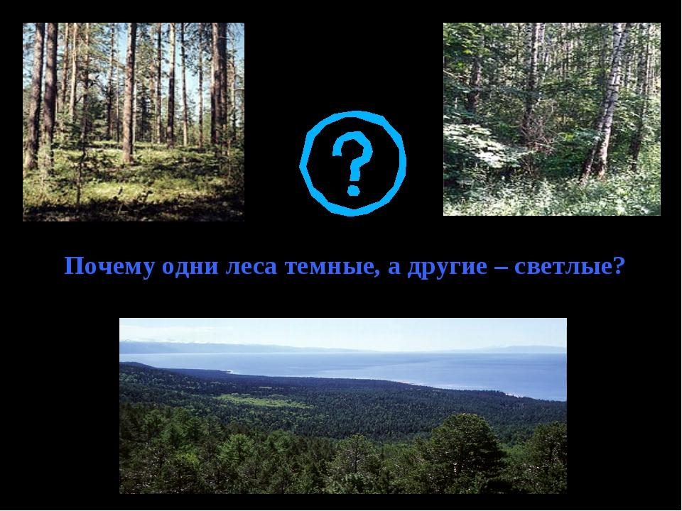 Почему одни леса темные, а другие – светлые?
