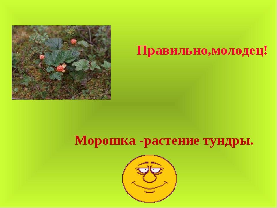 Правильно,молодец! Морошка -растение тундры.