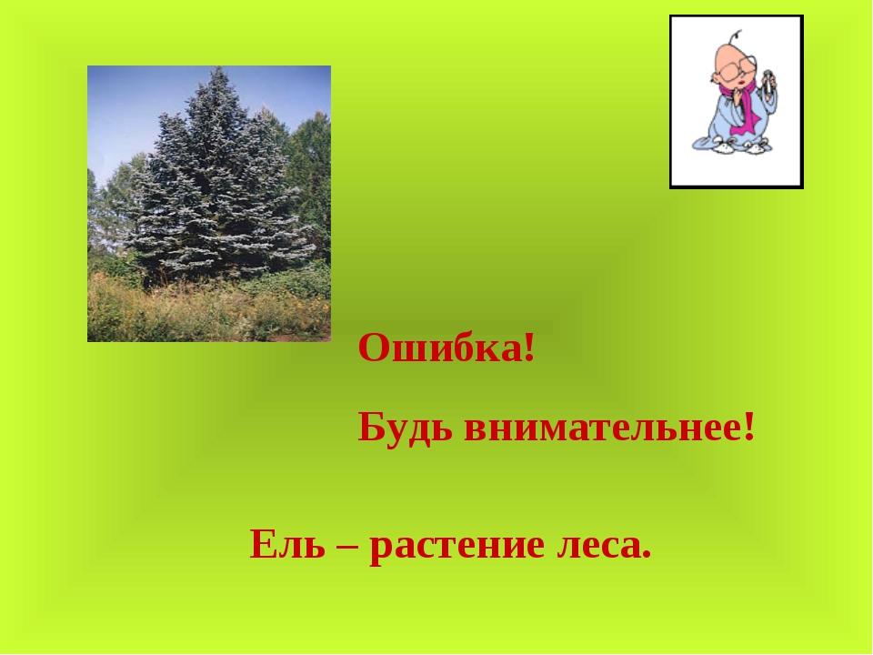 Ошибка! Будь внимательнее! Ель – растение леса.