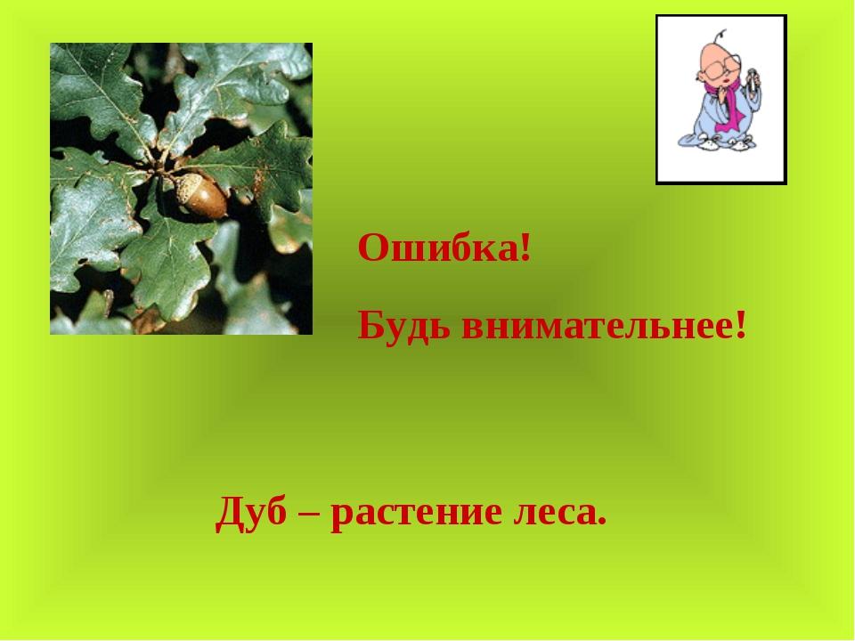 Ошибка! Будь внимательнее! Дуб – растение леса.