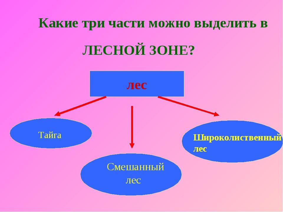Какие три части можно выделить в ЛЕСНОЙ ЗОНЕ? лес Смешанный лес Широколиствен...