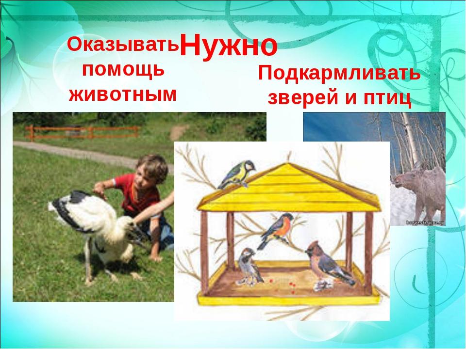 Нужно Оказывать помощь животным Подкармливать зверей и птиц