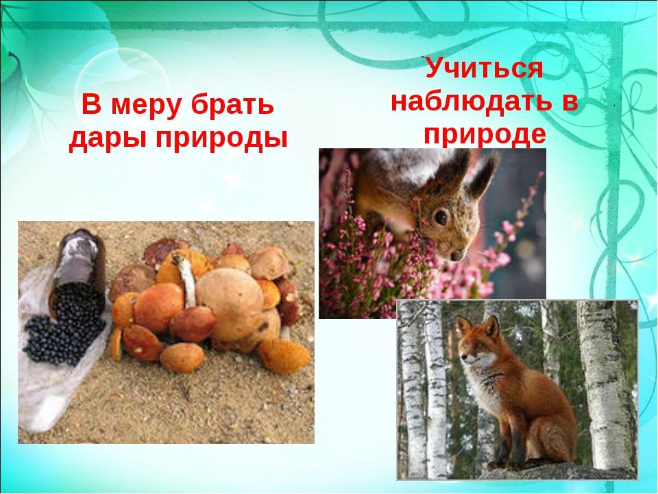 В меру брать дары природы Учиться наблюдать в природе