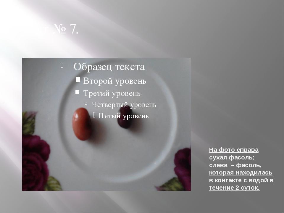 На фото справа сухая фасоль; слева – фасоль, которая находилась в контакте с...